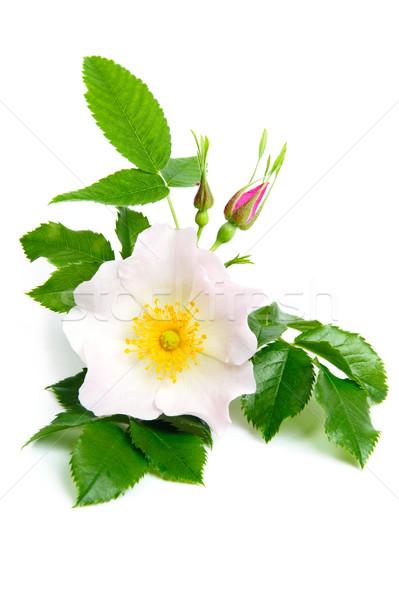 Nice flowers Stock photo © velkol