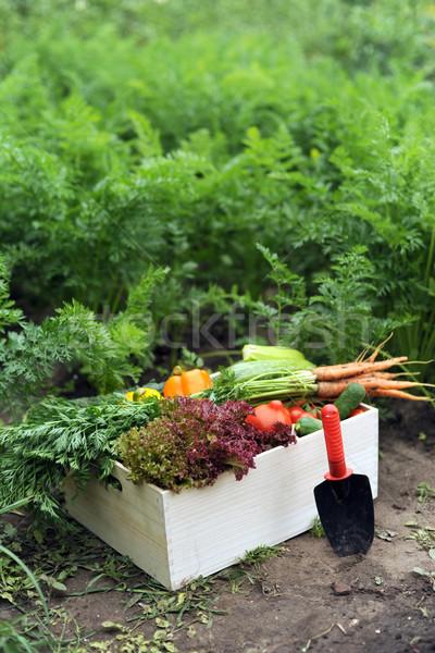 Wole skrzynia obraz warzyw żywności Zdjęcia stock © velkol