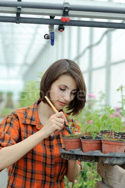 Foto stock: Nina · invernadero · imagen · de · trabajo · jardín · verano