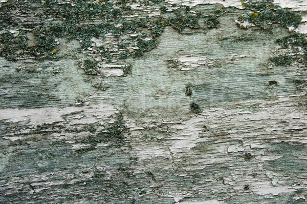 Textúra öreg ugatás fa textúra zöld fa Stock fotó © velkol