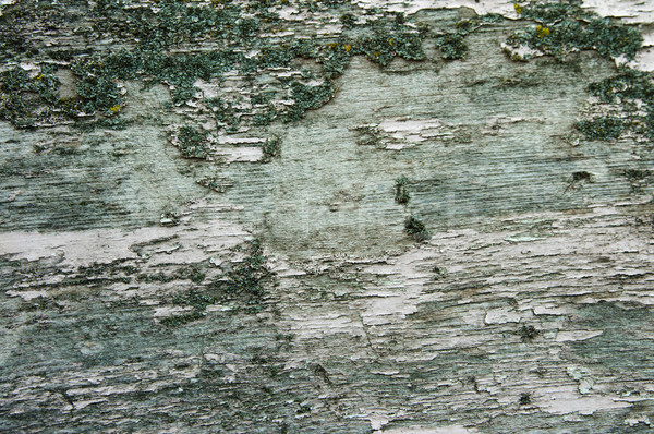 Textura edad corteza textura de madera verde madera Foto stock © velkol