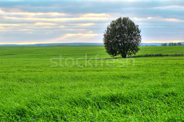 Tree on a green pasture Stock photo © velkol
