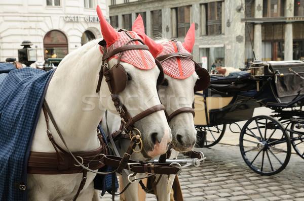 Beautiful horses Stock photo © velkol