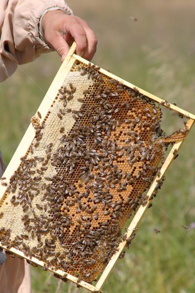 Swarm of bees Stock photo © velkol