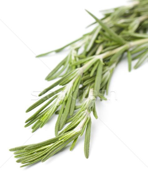 Sprig of fresh rosemary Stock photo © veralub