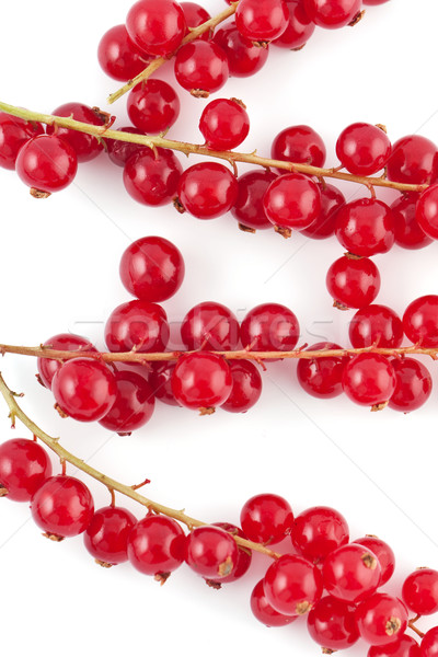 Red berries covering some branches Stock photo © veralub