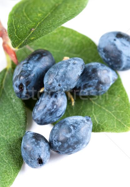Honeysuckle berries and leaves Stock photo © veralub