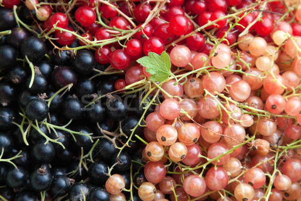 Assorted varieties of currants Stock photo © veralub
