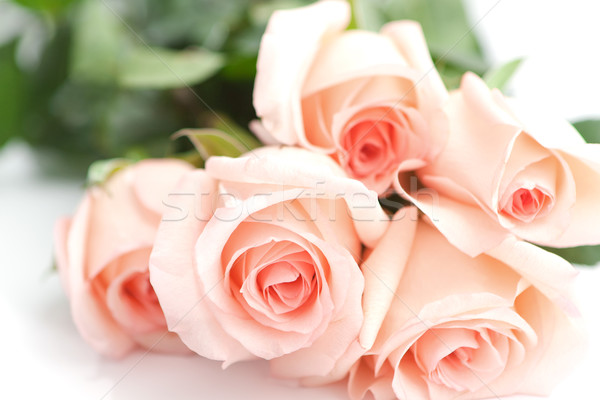 Bouquet parfait rose roses anniversaire Valentin Photo stock © veralub