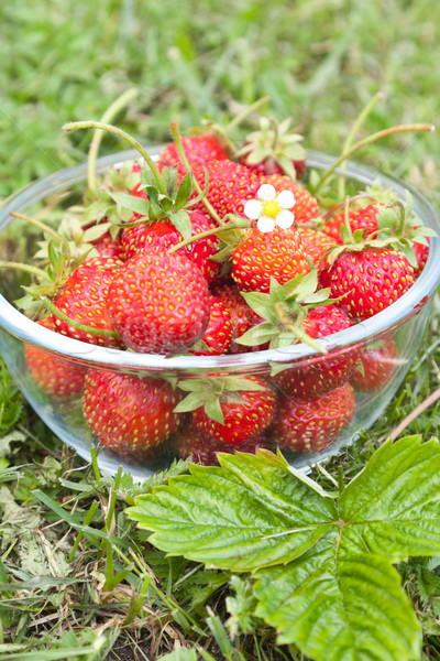 Freshly picked strawberries Stock photo © veralub