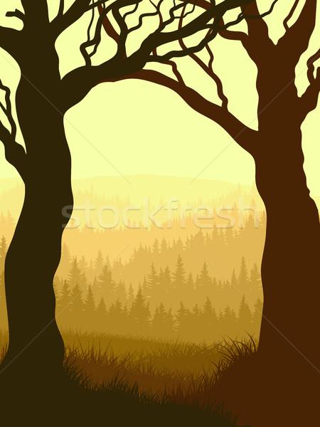 Vertical ilustração floresta árvore quadro Foto stock © Vertyr