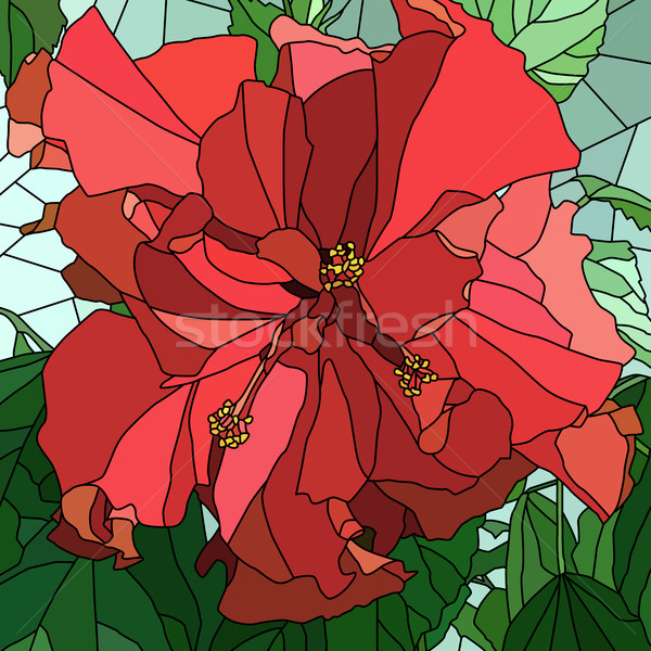 Vector illustration of flower hibiscus (Chinese rose). Stock photo © Vertyr