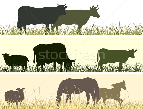 Horizontal ilustración granja mascotas vector banner Foto stock © Vertyr
