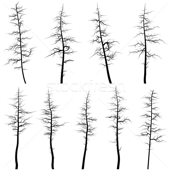 Silhouettes of old trees without leaves (deadwood). Stock photo © Vertyr