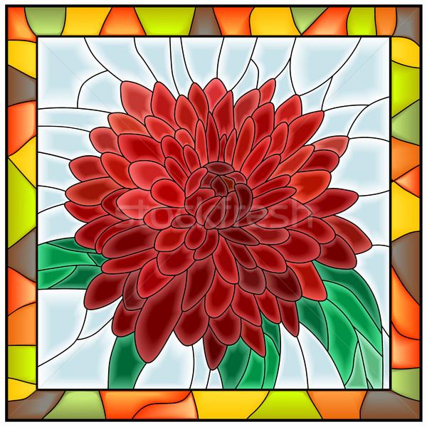 Flor crisântemo vermelho luz vidro Foto stock © Vertyr