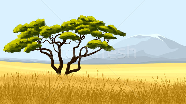 Yellow grass and African acacia. Stock photo © Vertyr