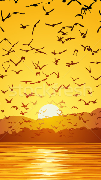 Vertical illustration flock of birds at sunset. Stock photo © Vertyr