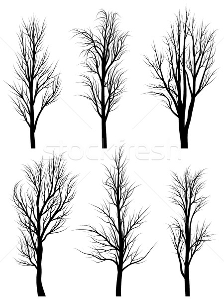 Silhouettes of birch trees without leaves. Stock photo © Vertyr