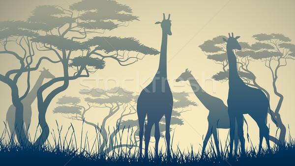 Horizontal illustration of wild giraffes in African savanna. Stock photo © Vertyr