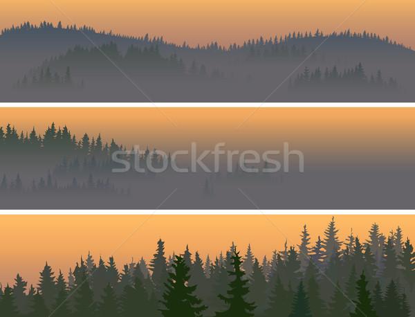 Orizzontale misty legno valle Foto d'archivio © Vertyr