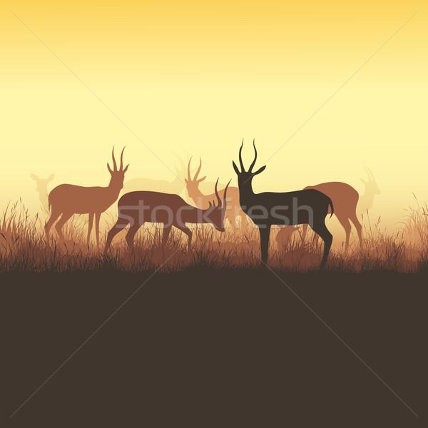 動物 広場 群れ 草 日没 ストックフォト © Vertyr