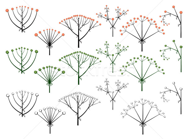 Set of vector different types of inflorescence. Stock photo © Vertyr
