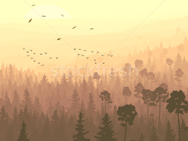 Wild birds in coniferous wood in morning fog. Stock photo © Vertyr
