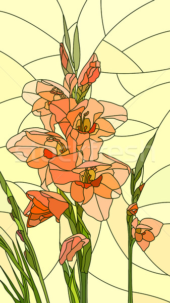 Vector illustration of flowers red gladiolus. Stock photo © Vertyr