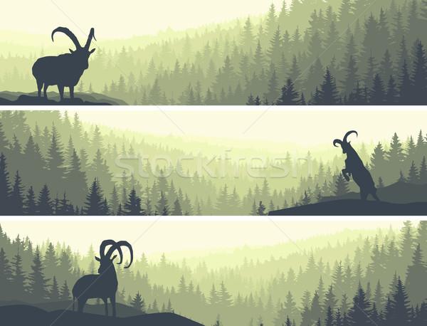 Horizontal banners of hills coniferous wood. Stock photo © Vertyr