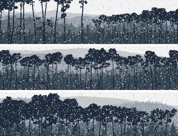 Horizontal banners of winter coniferous pinewood. Stock photo © Vertyr