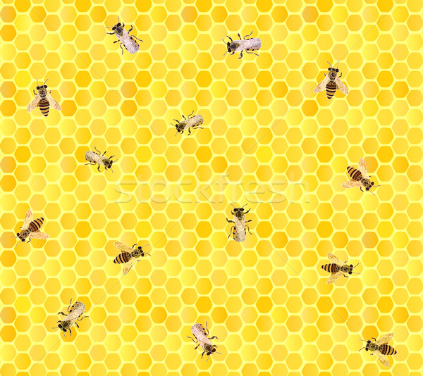 Many bees on honeycomb, seamless background. Stock photo © Vertyr