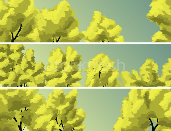 Stock photo: Horizontal banners crown of trees against the sky.