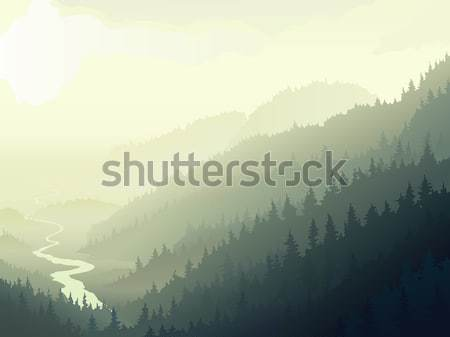 Wild coniferous wood in a morning fog. Stock photo © Vertyr