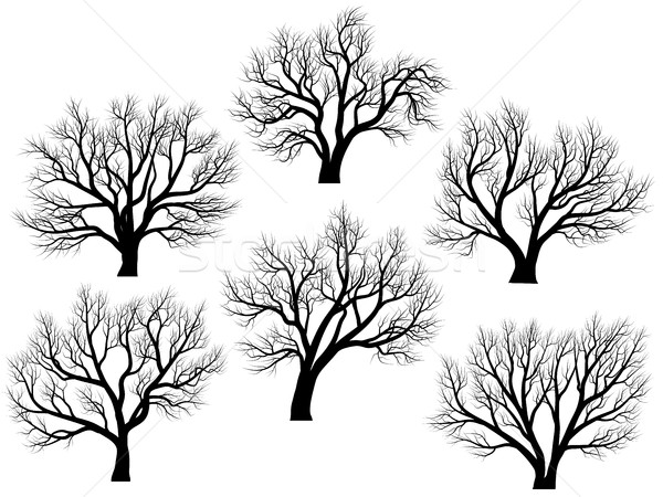 Silhouettes of trees without leaves. Stock photo © Vertyr