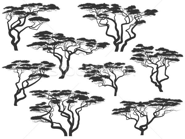 Silhuetas africano árvores conjunto vetor isolado Foto stock © Vertyr