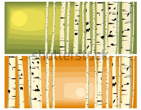 Horizontal illustrations of trunks birches. Stock photo © Vertyr