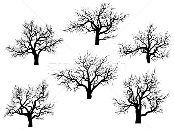 Silhouettes of oak trees without leaves. Stock photo © Vertyr