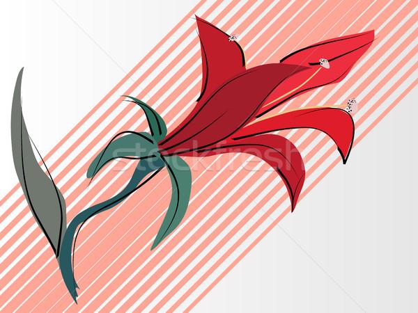 ベクトル カード 赤 ユリ 単純な 自然 ストックフォト © Vertyr