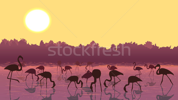 Vector flamingos at sunset in the river. Stock photo © Vertyr