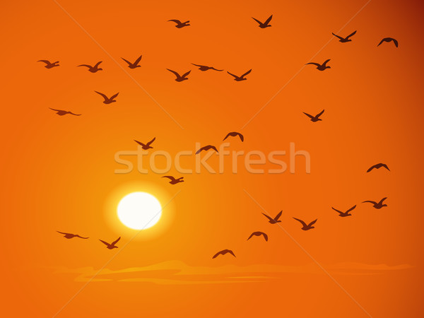 Vuelo aves naranja puesta de sol nubes naturaleza Foto stock © Vertyr
