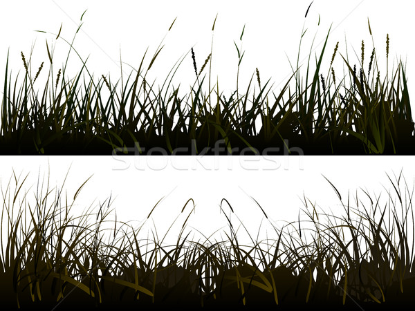 Background of realistic meadow grass. Stock photo © Vertyr