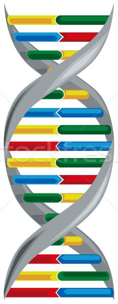Sav DNS oktatás gyógyszer tudomány kutatás Stock fotó © Vertyr