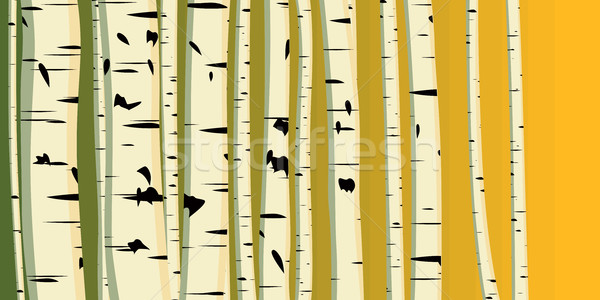 Horizontal illustration of trunks birches. Stock photo © Vertyr