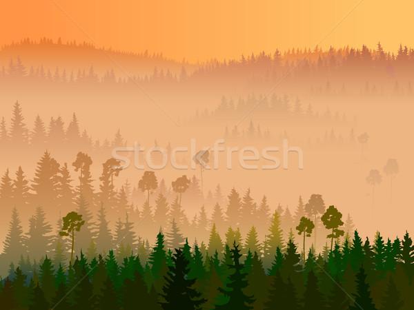 実例 谷 木材 午前 霧 ストックフォト © Vertyr