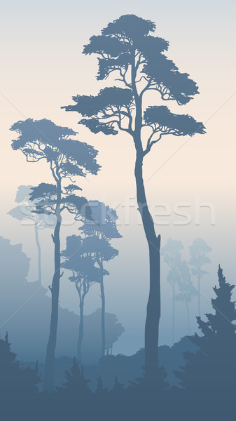 Verticaal illustratie bos lang ochtend Stockfoto © Vertyr