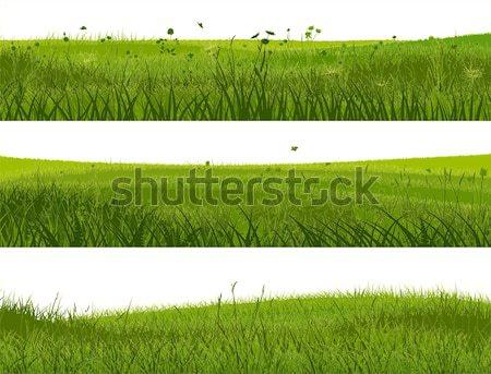баннер аннотация луговой трава горизонтальный Баннеры Сток-фото © Vertyr