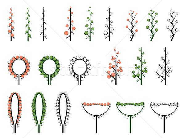 セット ベクトル 異なる 科学的な 花 植物学 ストックフォト © Vertyr
