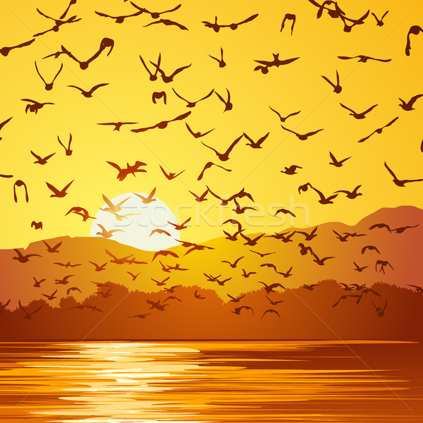 Square illustration flock of birds at sunset. Stock photo © Vertyr