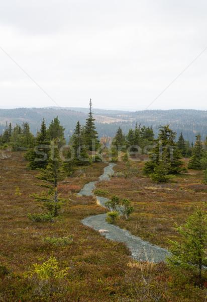 Drogowego rzadki drzew trawy wody świetle Zdjęcia stock © vetdoctor
