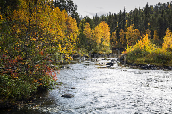 Trees and devios river at conservation area Stock photo © vetdoctor
